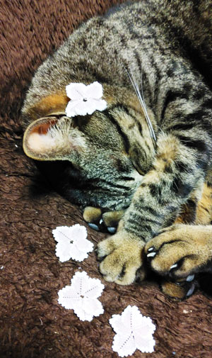 猫と花びら
